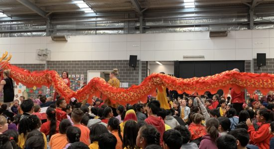 308 | Dragon Dynasty Festival