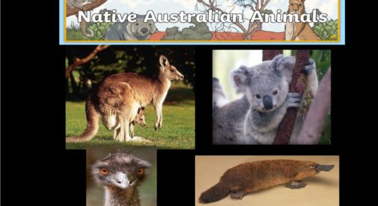 001 Australian Animals