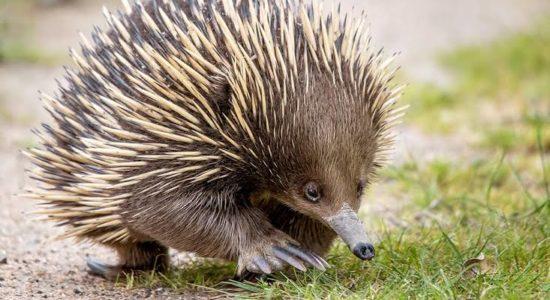 024 | Australian Animals